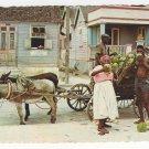 Caribbean Coconut Vendors Donkey Cart Vintage 1965 Postcard 4X6