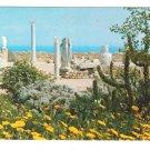 Africa Tunisia Carthage Antiquarium Statues Ancient Ruins Vintage 4X6 Postcard