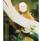 National Zoological Park Rare Red Uakari Monkey Washington DC Vintage Zoo Postcard