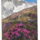 Alpenflora Mountain Flowers Primula Minima Glutinosa N&O Series 518 No 894 Postcardcard