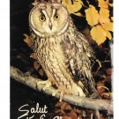 Greetings Salut Vieille Chouette Hello Old Owl Collection Orion Paris Postcard 4X6