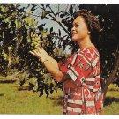 HI Keaau Orchard Royal Hawaiian Macadamia Nuts Big Island of Hawaii Vtg Postcard