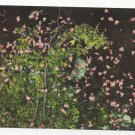 Greece Rhodes Valley of the Butterflies Papillons Vintage Postcard 4X6
