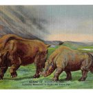 Colorado Museum of Natural History Mural Titanotheres Prehistoric Mammal Postcard