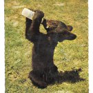 Lunch Time for Smokette Little Black Bear Drinking Baby Bottle Jack Reynolds 4X6 Postcard