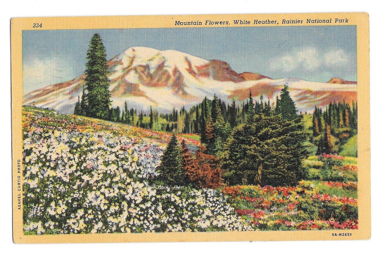 WA Mt Ranier National Park Wildflowers White Heather Curteich Linen Postcard