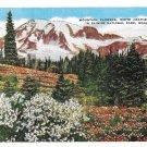 WA Mt Ranier National Park Wildflowers Blue Lupin Asahel Curtis Linen Postcard E C Kropp