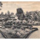 VA Mount Vernon Garden Rose Beds Vtg Almours Securities H L Wittemann Postcard
