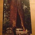 Vintage The Shrine Tree Myers Flat California Postcard
