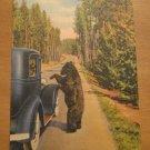 Vintage Bear Beggar Yellowstone National Park Postcard