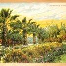 Vintage California In Wintertime Postcard