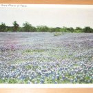 Vintage Bluebonnets State Flower Of Texas Postcard