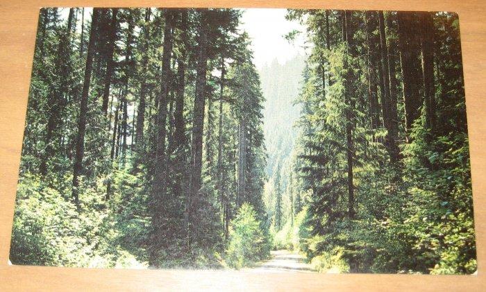 Vintage The Pacific Northwest Postcard