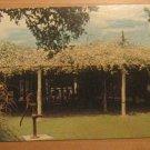 Vintage Worlds Largest Rose Bush Postcard