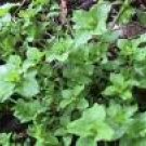 Chickweed cut