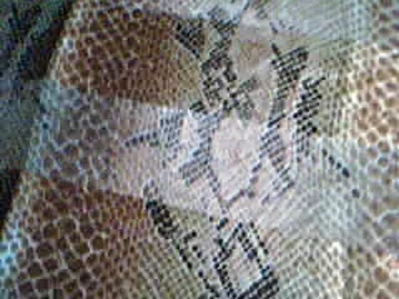 Snakeskin Print Scarf