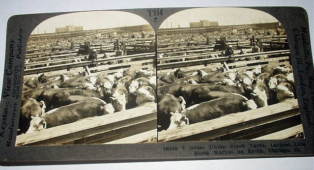 ANTIQUE STEREOGRAPH VIEW CARD-GREAT UNION STOCK YARDS,CHICAGO