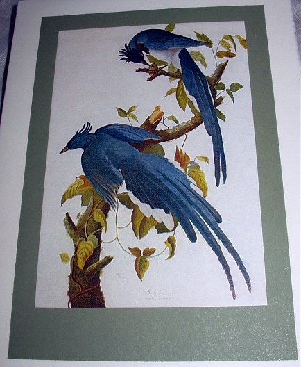 VINTAGE JOHN JAMES AUDUBON,1966 FIRST ISSUE STAMP AND LITHOGRAPH