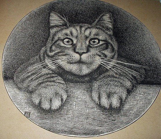 1800s Antique Etching Illustration Sweet Tabby Cat In Portrait