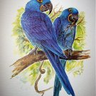 Beautiful BLUE HYACINTH MACAWS Newer Lithograph Print