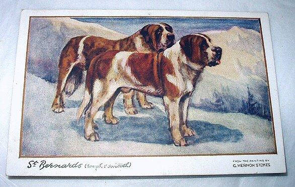 Used Postcard Printed In England-ST. BERNARDS(Rough & Smooth)G.Vernon Stokes Artist
