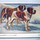Used Postcard Printed In England-ST. BERNARDS(Rough & Smooth)G.Vernon Stokes Artist
