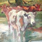 Group of Pastural Cows Wading in Water-Vintage Calendar Print