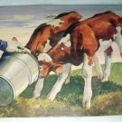 Charming Farming Print of two young calfs taking a drink