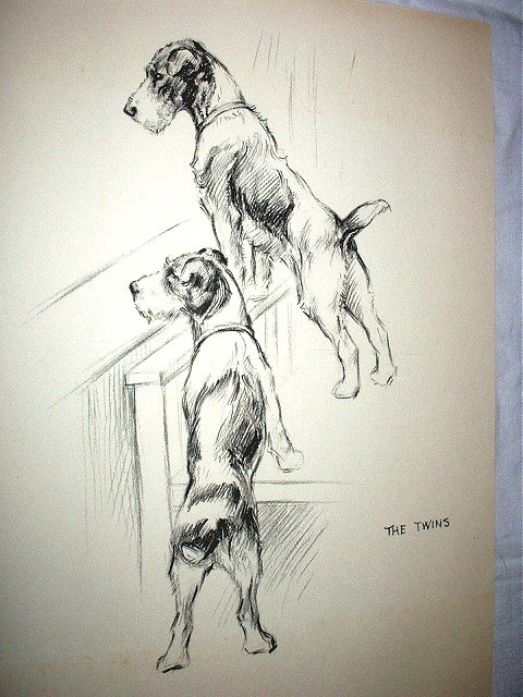 Twin Airedale Dogs-Larger Vintage Lithograph Print,Backside Scottish Terrier