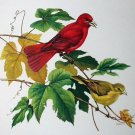 Summer Tanager On Branches Artist Roger Tory Peterson Vintage 1958 Lithograph Print