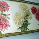 Paul de Longpre 1896 Yard Long Original Antique Chromolithograph Print Trio Chrysanthemum Flowers
