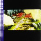 1 left - Movie Film #37 - 6 Frames - Battle - Mononoke - Ghibli (real film)