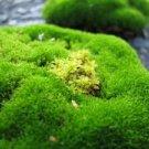 Irish Moss  (soap with shea butter 2oz)
