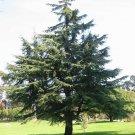 Cedar Wood Pure Essen Oil 1/2 oz (15 ml)