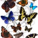 Butterflies and Moths Digital Collage Sheet