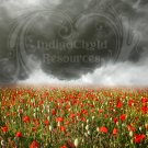 Poppies in the Storm Field