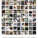 Cat Scrabble Tile Digital Collage Sheet