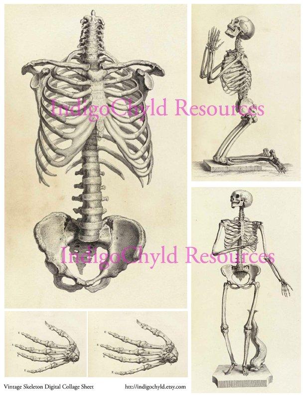 Vintage Skeleton Digital collage Sheet JPG