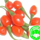 1000+ OFDC Certified Organic Goji Berry Seeds