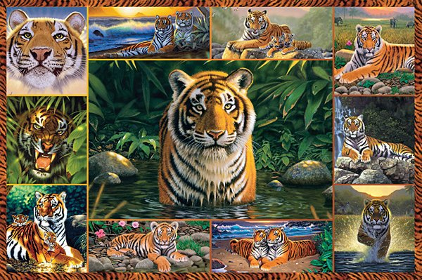 Tiger - 5,000 piece Ravensburger puzzle - for Ages 12+