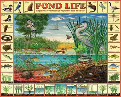 Pond Life - 1,000 piece White Mountain puzzle - for Ages 12+