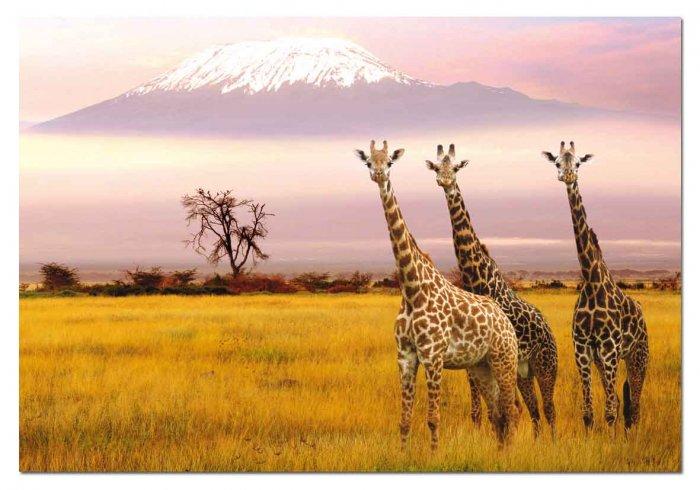 Amboseli National Park, Kenya - 1,000 piece Educa puzzle - for Ages 12+