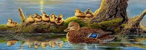 Spring Mallards - 500 piece SunsOut puzzle - for Ages 12+