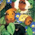 Guinea Pigs - 100 piece SunsOut puzzle - for Ages 6+