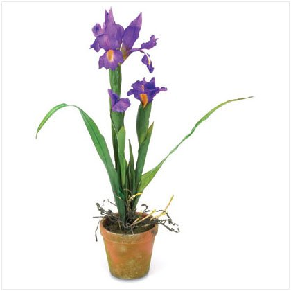 "24"" Potted Iris Flowers"