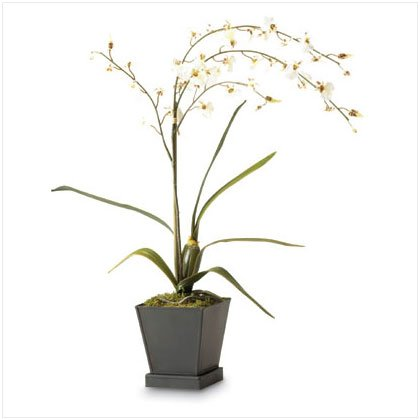 """20"""" Potted Everblooming White Orchids"""