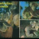 Cute & Cuddly Australian KOALAS - Glossy Color Postcard