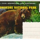 1950s YELLOWSTONE NATIONAL PARK, Wyoming - Full Color Souvenir Folder/Mailer