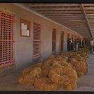 1950s TARPON SPRINGS, FLORIDA - Sponge Auction - Postcard