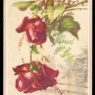 CONSOLIDATED COFFEE CO. Victorian TC - Two red roses w/ cottage in background